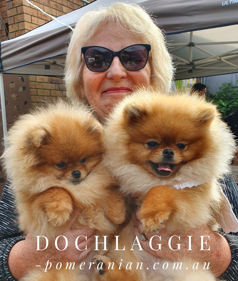 Denise Leo and Pomeranians