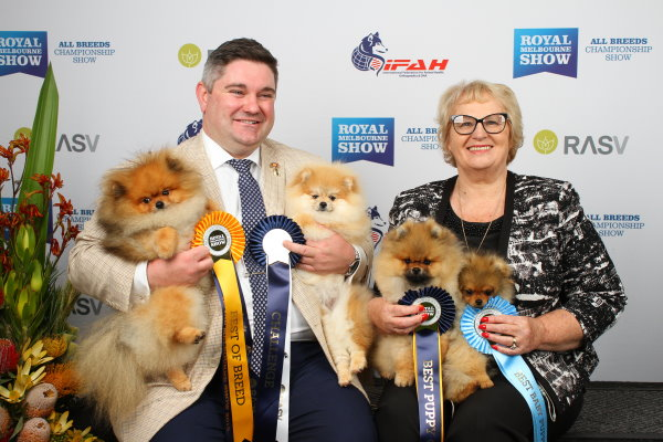 Pomeranians Melbourne Royal 2018