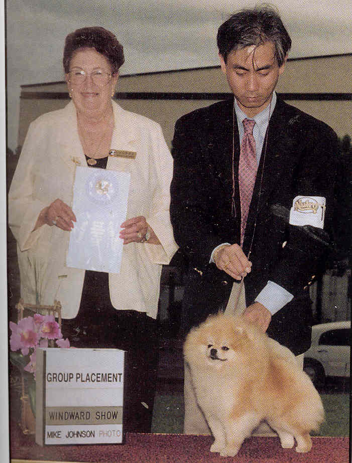 Champion Pomeranian American & Canadian Champion Sandalwood JI Marty JR Imported U.S.A.