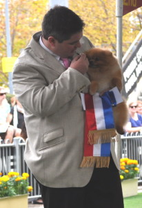 "BEST OF BREED POMERANIAN 2014 SYDNEY ROYAL. Multi BIS Champion Dochlaggie Dragon Double ""Benny"" Pictured with Jarrod Tyler."