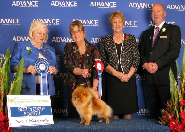Multi BISA Supreme Champion Dochlaggie Dragon Double Best Exhibit in Group 4th at Melbourne Royal 2013