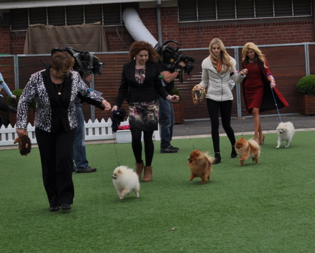 Dochlaggie Pomeranians, Denise Leo appeared with Gamble Breaux on the Real Housewives of Melbourne