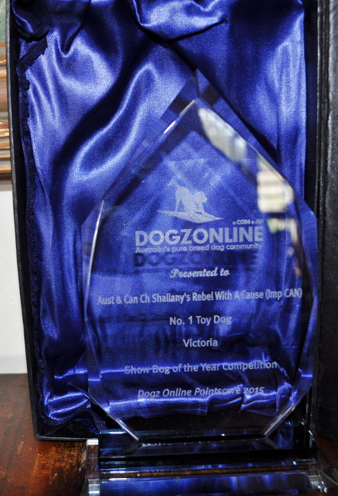 I received this lovely trophy from Dogzonline . Soo excited. Thank you to all who helped make this happen. Colleen ( Rebel's other Mother & Breeder), Jarrod, the Judges who appreciated Rebel's outstanding qualities, the other exhibitors who always congratulated us on Rebel's wins and Dogzonline.
