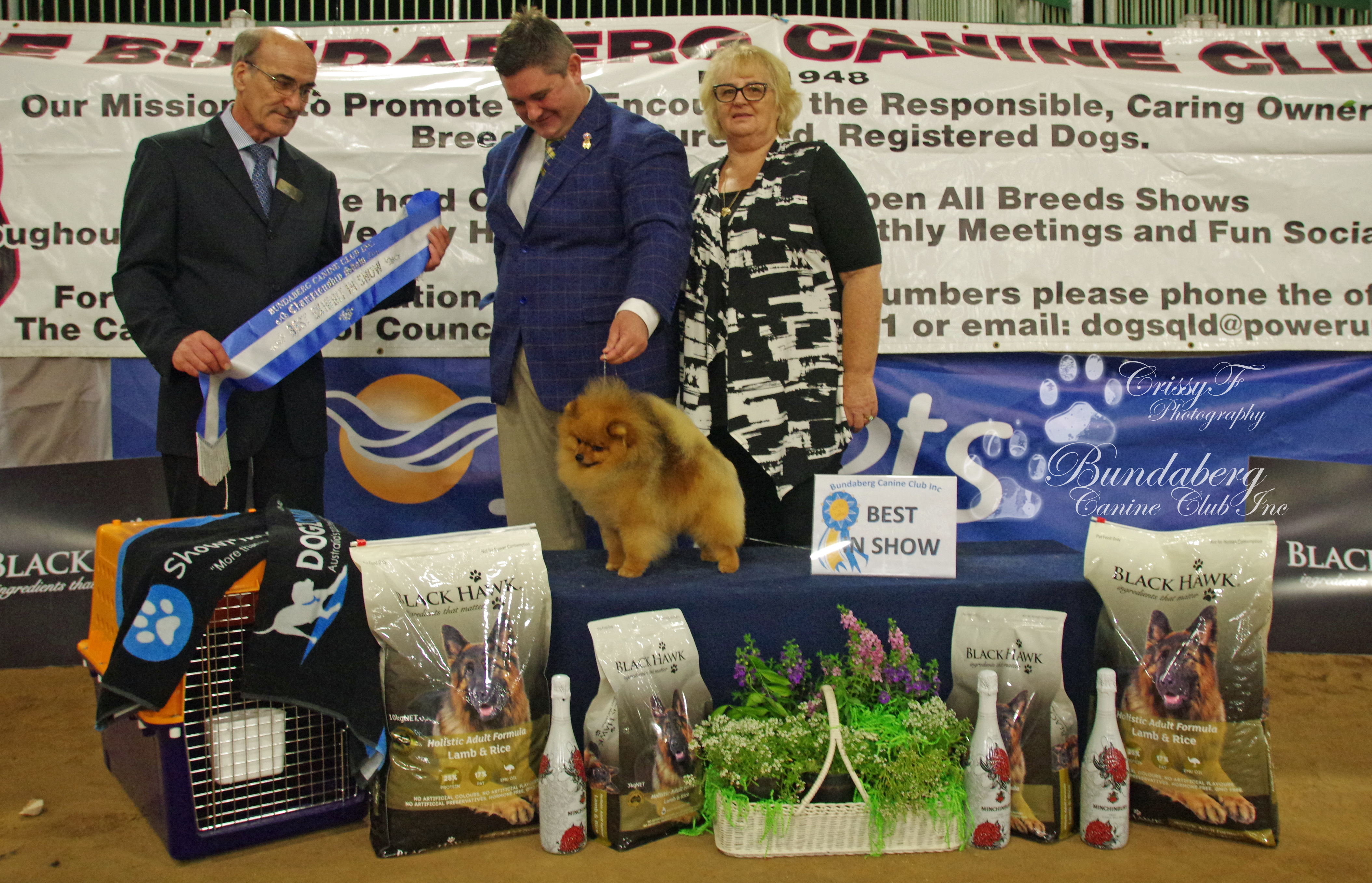 Rebel the Pomeranian wins BEST IN SHOW at Bundaberg