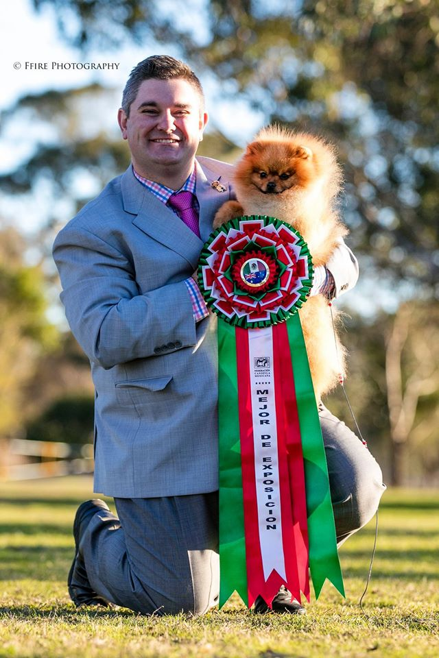 Rebel the Pomeranian wins BEST IN SHOW at Sydney Kennel Club