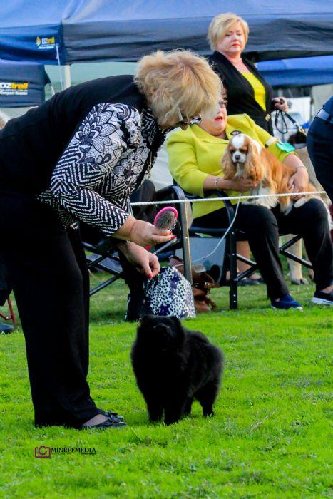 Dochlaggie Pomeranian Breeder Australia