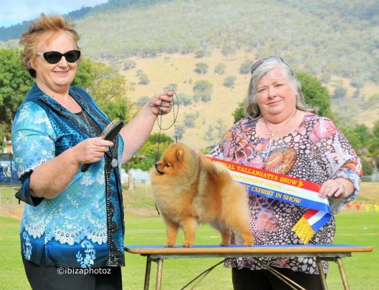 Canadian & Australian Champion Shallany's Rebel With A Cause imported Canada ) won r/u BEST EXHIBIT IN SHOW (Best Exhibit in Show 2nd ).