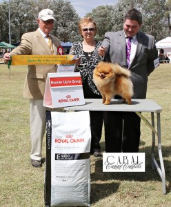 1st March, 2015 : Champion Shallany's Rebel With A Cause ( imported Canada ) r/u to Best Exhibit in Group at Canberra Royal Show