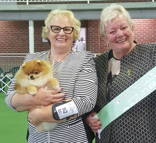 Jack, Pomeranian, Dochlaggie Deagol The Hobbit, wins, Best Exhibit in Group, dog, shows, Melbourne, Bulla, Dochlaggie