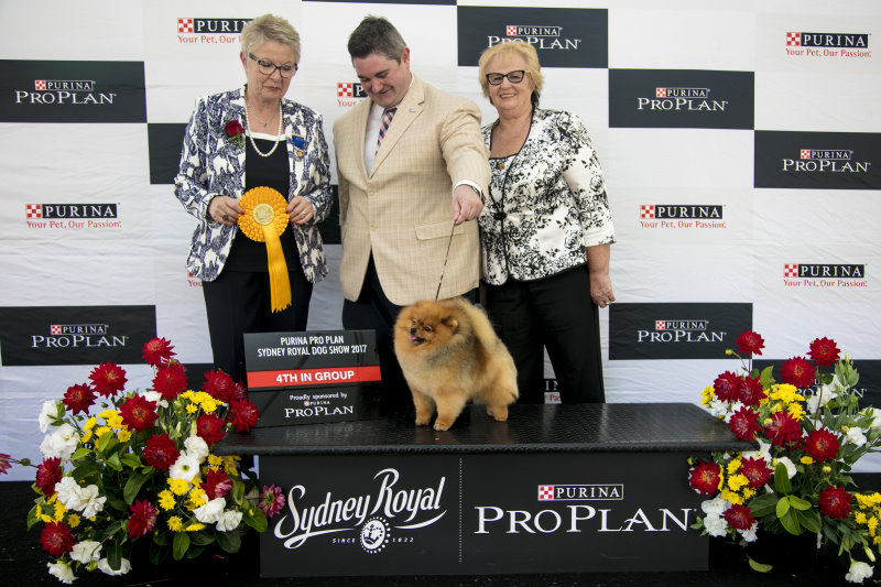 Supreme Champion Shallany's Rebel With A Cause wins Best in Group 4th at Sydney Royal Easter Show 2017