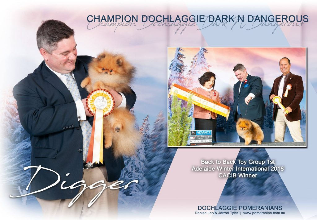 Champion Dochlaggie Dark N Dangerous