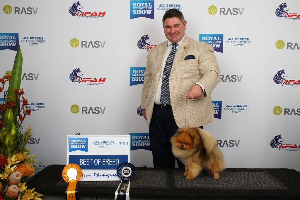 Champion Dochlaggie Dark N Dangerous Best of Breed Pomeranian at 2018 Royal Melbourne Show