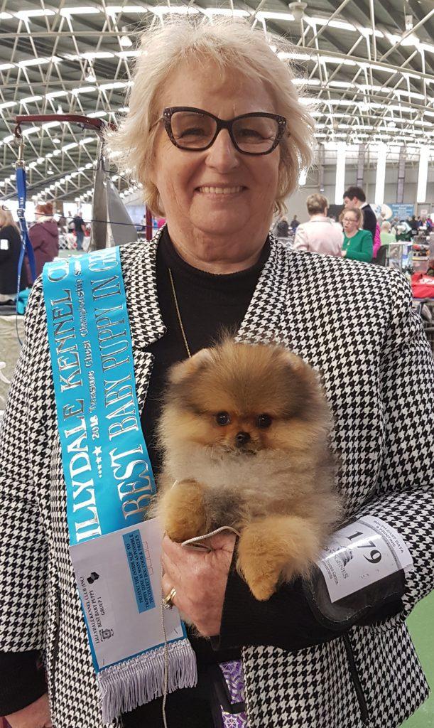 Dochlaggie Debonair Winning Best Baby Puppy in Group at Lilydale Kennel Club Show, 2018