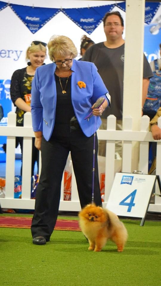 Dochlaggie Debonair Winning Reserve Challenge Dog Melbourne Royal 2019.