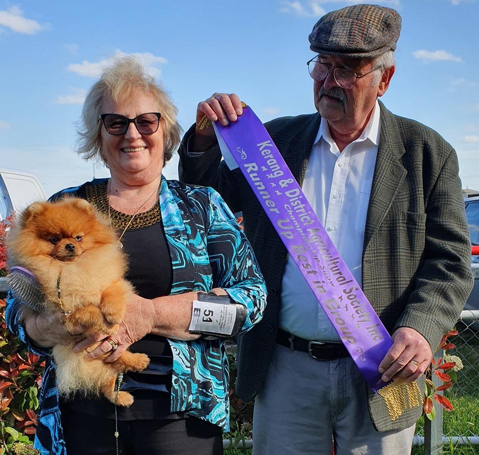 Australian Champion Dochlaggie Debonair Winning ru Best Exhibit in Group at Kerang Show under Toy Specialist Mr A. Mae