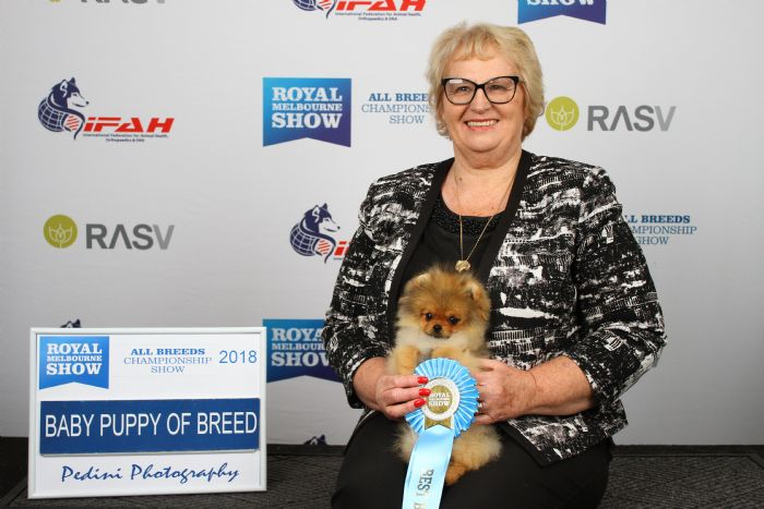 Dochlaggie Debonair at winning Best Baby Puppy Pomeranian at Royal Melbourne Show 2018