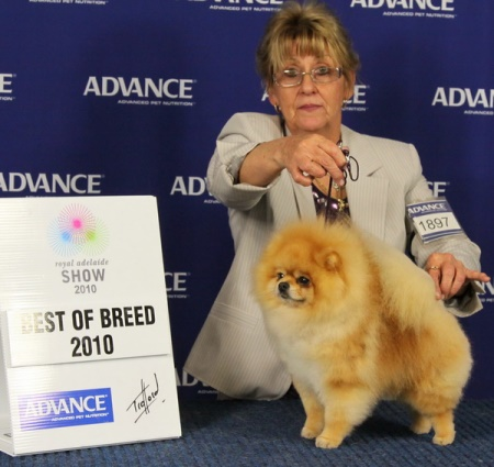 Australian Supreme Champion Dochlaggie Dragon Heart