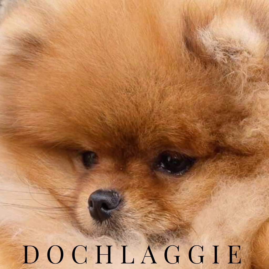 Dochlaggie Delightful Desire