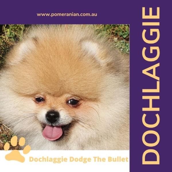 Dochlaggie Dodge The Bullet