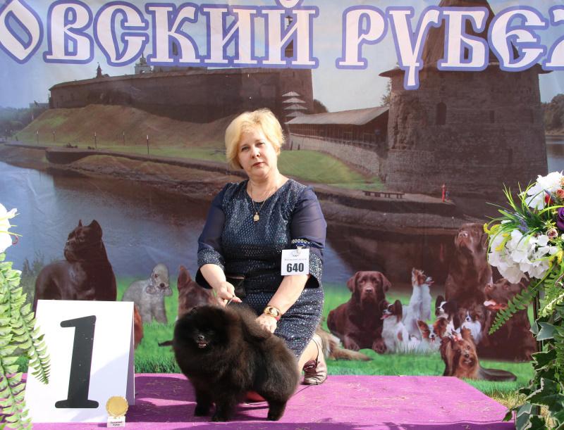 Russian and Belarus Junior Champion Dan-Star Black King ( Imported Russia)