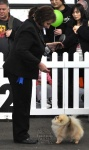 Izzy winning her class at the Royal Melbourne Show.