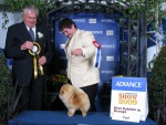 Australian Multi BISA Supreme Champion Dochlaggie Dragon Heart winning his first Royal Best in Show 4th award.