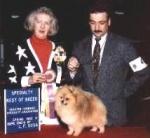 Multi BIS American Champion Dochlaggie Dagwood