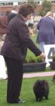 Champion Dochlaggie Black Beau