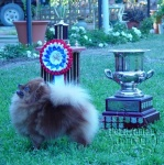BISS Champion Dochlaggie Dixie Jazz