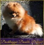 Dochlaggie Double Delight