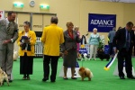 Australia BISA Champion Dochlaggie Dragon Double pictured here winning Group 2 at Royal Adelaide Show