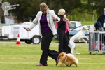 Australia BISA Champion Dochlaggie Dragon Double pictured here with Cathy Camac after winning ALL BREEDS BEST IN SHOW